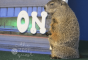Groundhog-at-the-Akron-Zoo-is-cuter-than-the-marauder-in-my-garden-2-The-Zest-Quest