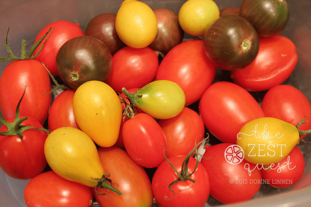 Garden-Harvest-092115-tomatoes-Yellow-Fargo-Pear-Juliet-Black-Cherry-Principle-Borghese-2-The-Zest-Quest