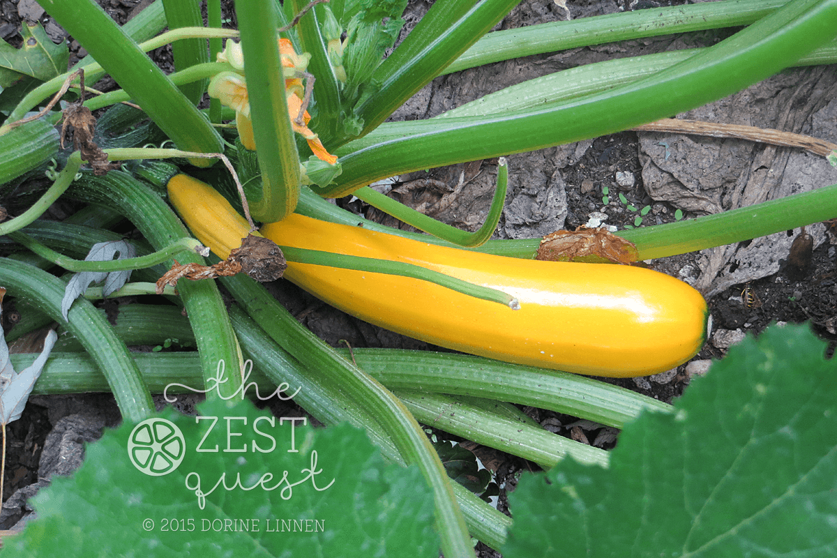 Garden Harvest NE Ohio September The Zest Quest