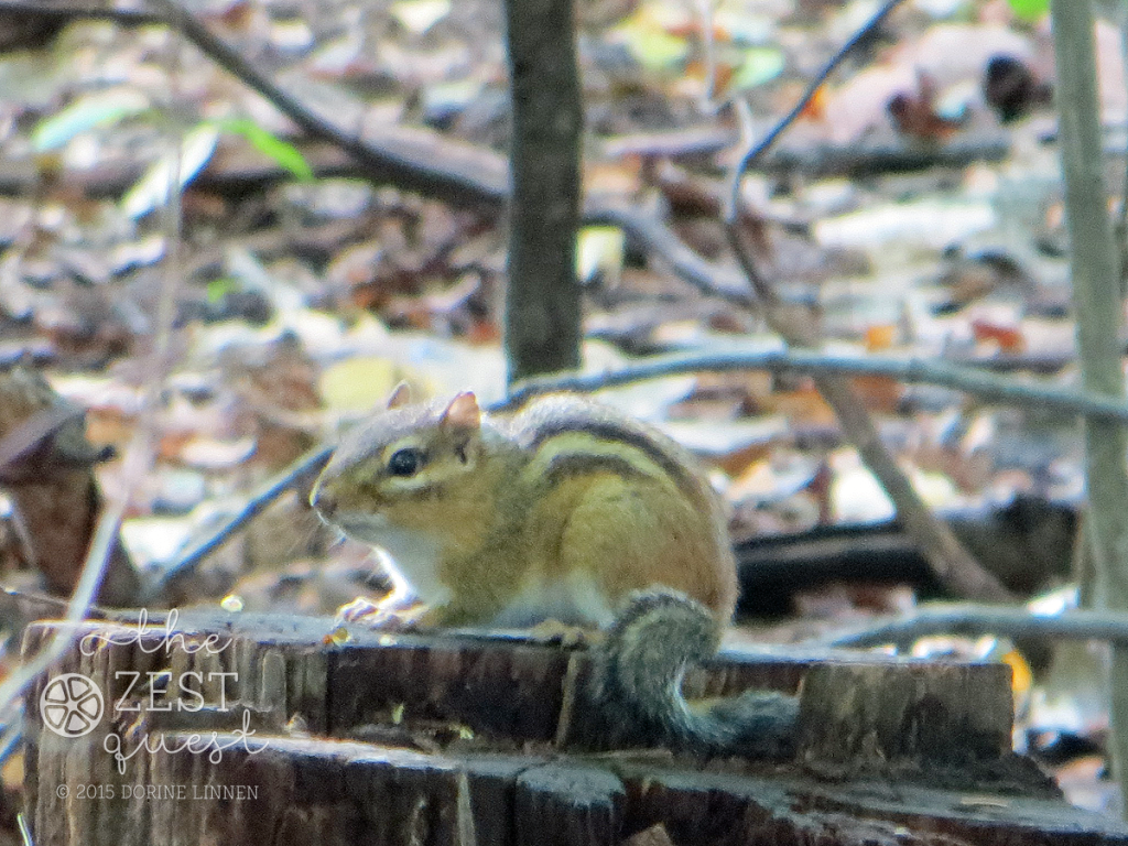 Hiking-Challenge-2015-Ohio-Hike-1-Chipmunk-2-poses-The-Zest-Quest