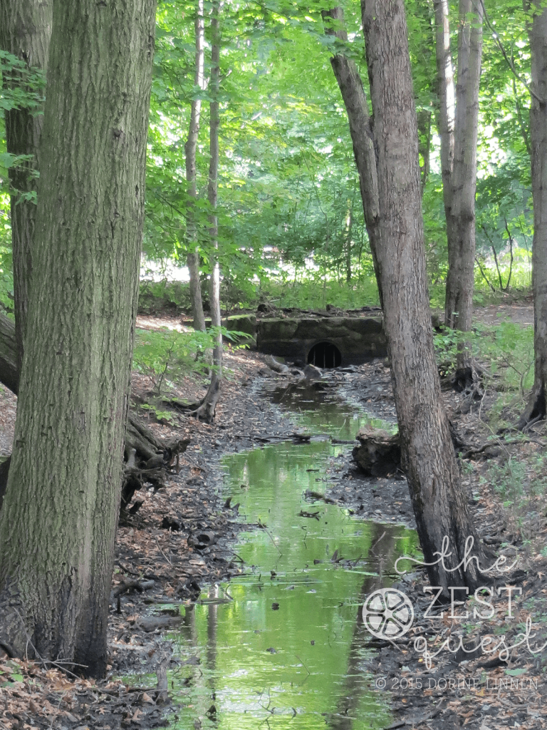 Hiking-Challenge-2015-Ohio-Hike-1-Goodyear-Hts-Alder-Trail-Creek-Reflection-2-The-Zest-Quest