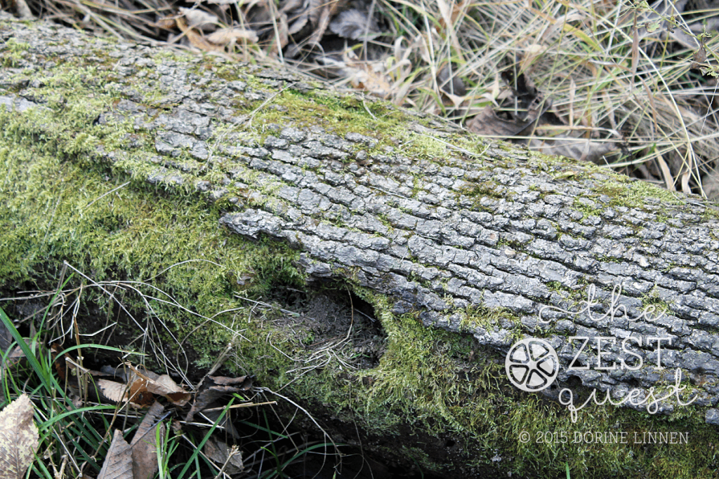 Hiking-Challenge-2015-Ohio-Hike-2-Hudson-Wood-Hollow-Downy-Loop-Mossy-Log-2-The-Zest-Quest