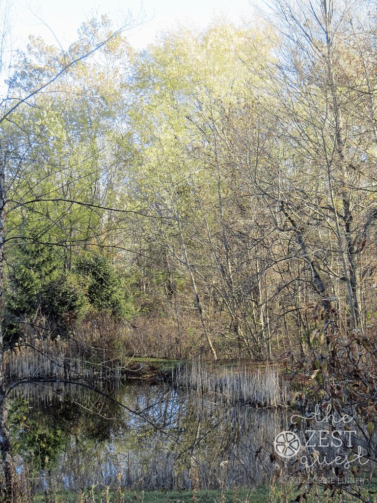 Hiking-Challenge-2015-Ohio-Hike-extra-Plum-Creek-Medina-County-2-The-Zest-Quest