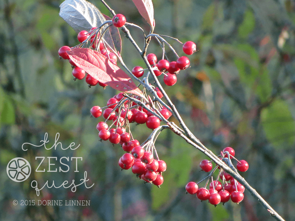 Hiking-Challenge-2015-Ohio-Hike-extra-Plum-Creek-Medina-County-red-berries-2-The-Zest-Quest