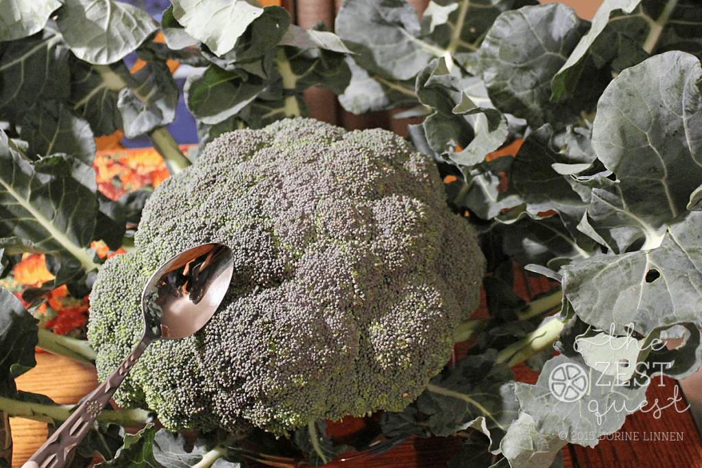 Ohio-Farm-Share-Week-22-Huge-Broccoli-the-size-of-a-mixing-bowl-2-The-Zest-Quest