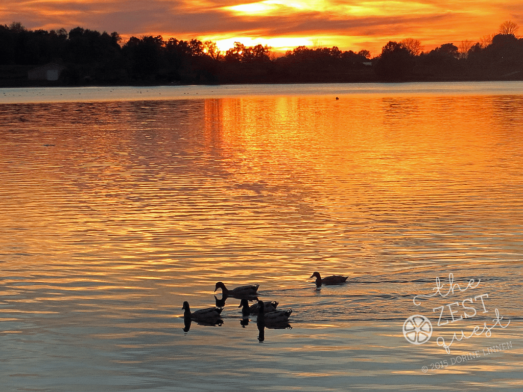 Sunset-at-Springfield-Lake-Ohio-highlights-ducks-out-for-a-paddle-2-The-Zest-Quest
