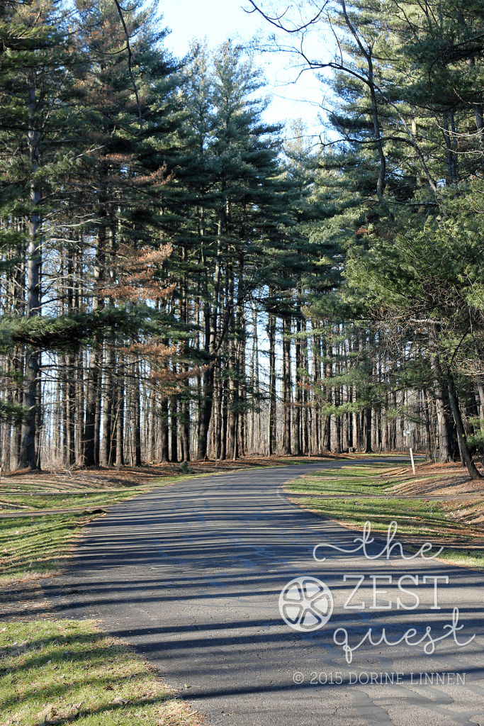 Nimisila-in-Ohio-pine-lined-roadway-beckons-you-to-explore-2-The-Zest-Quest